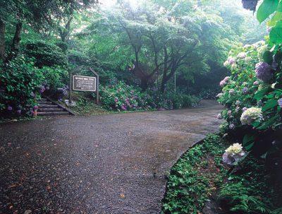 dear fukui ディア 福井 ふくい 足羽山公園