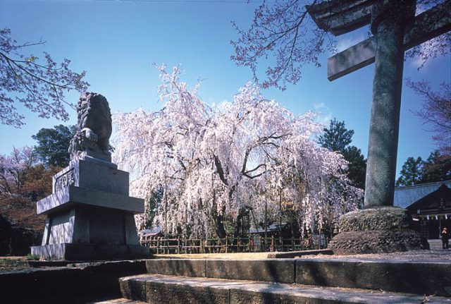 福井パワースポット寺足羽神社の画像