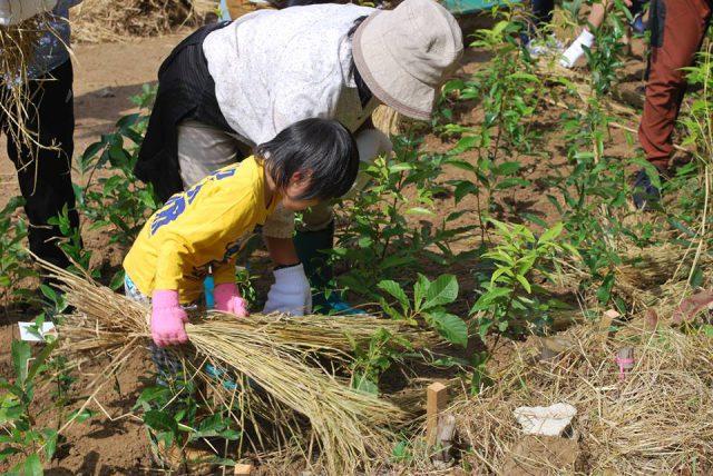 dear fukui ディア 福井 ふくい 植樹祭
