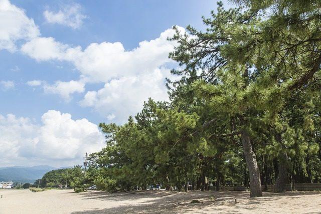 気比の松原の画像