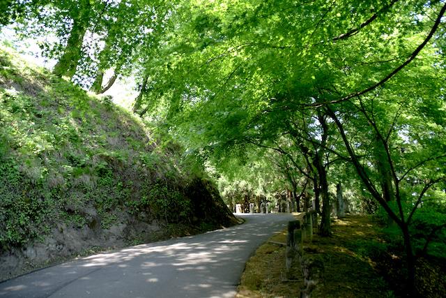 福井鯖江西山公園の画像
