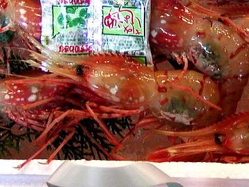 福井若狭魚トヤマエビの画像