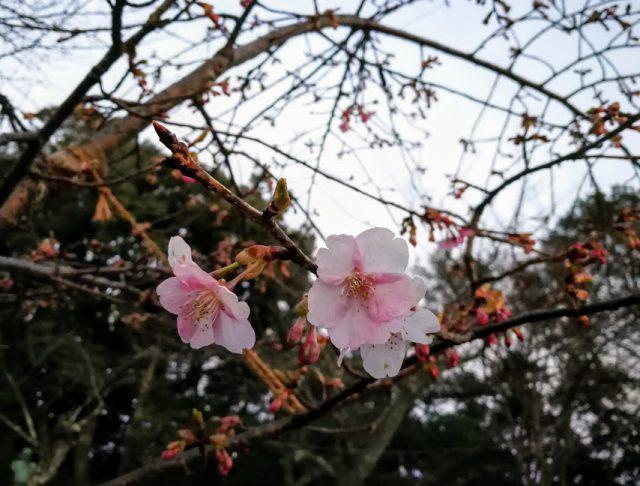 福井カフェ大久保茶屋の画像