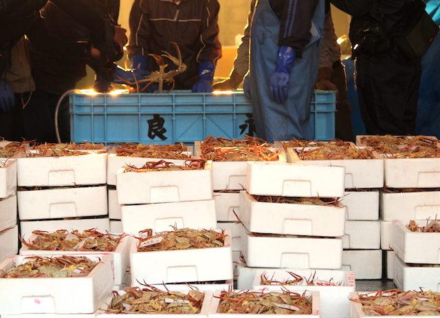 福井越前がに漁港初競りの画像