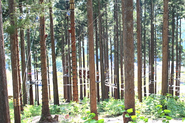 福井池田ツリーピクニックアドベンチャーツリークライムの画像