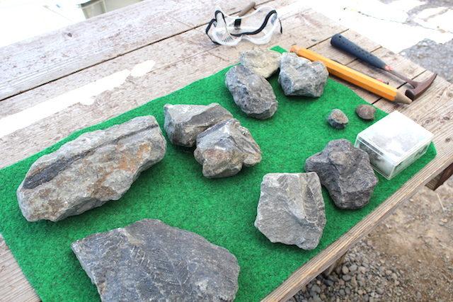 福井勝山恐竜化石発掘体験の画像