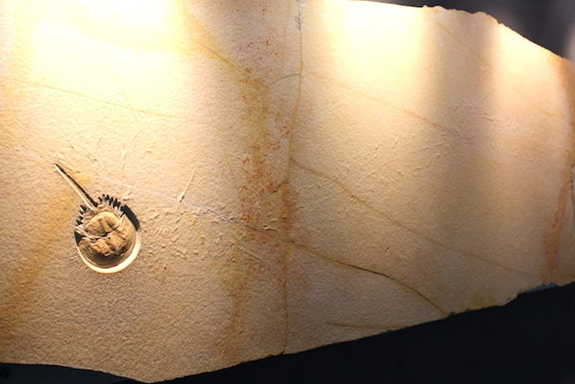 福井観光勝山恐竜博物館の画像