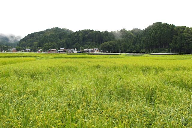 福井池田農村体験獣害対策の画像
