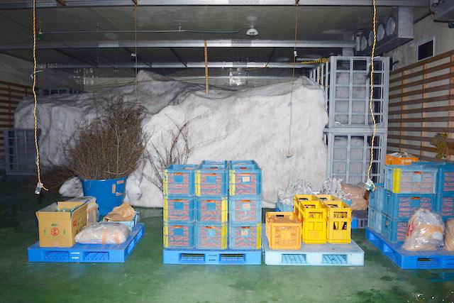 福井勝山ふるさと納税雪恐竜雪室