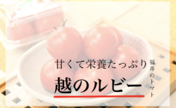福井ミディトマト越のルビー